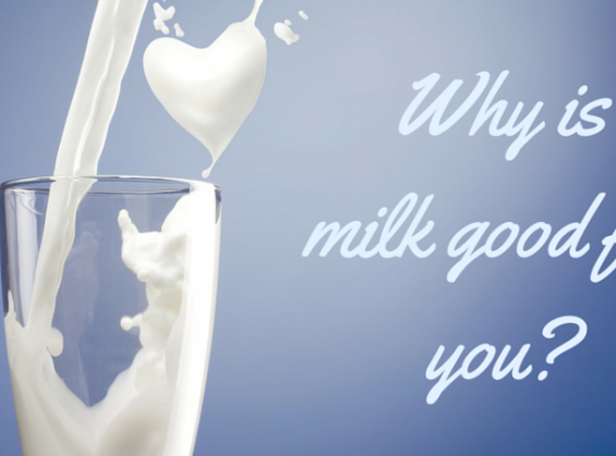 why is milk good for you essay If you are a milk drinker, i  does milk really do your body good essay  this is why the american academy of pediatrics recommends exclusive.