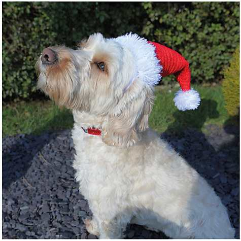 Rosewood Dog Santa Hat