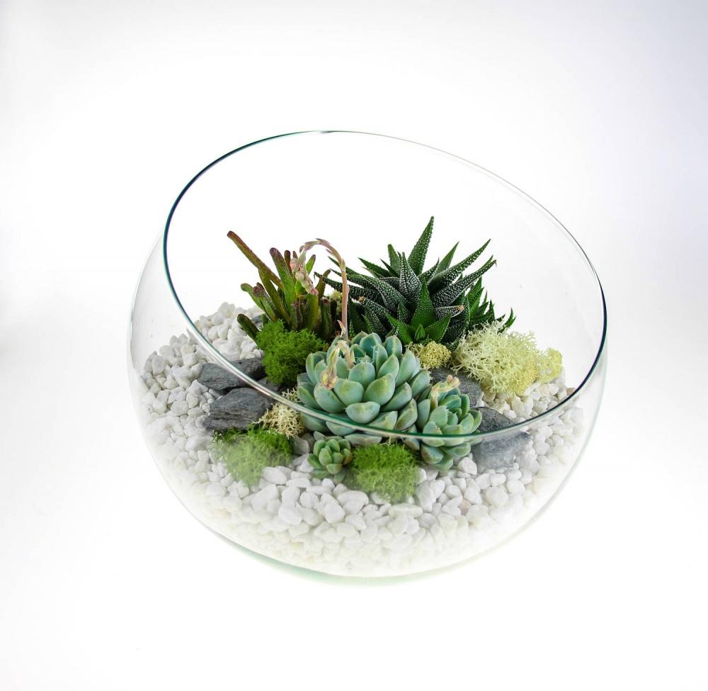 Angled Glass Bowl Succulent Terrarium