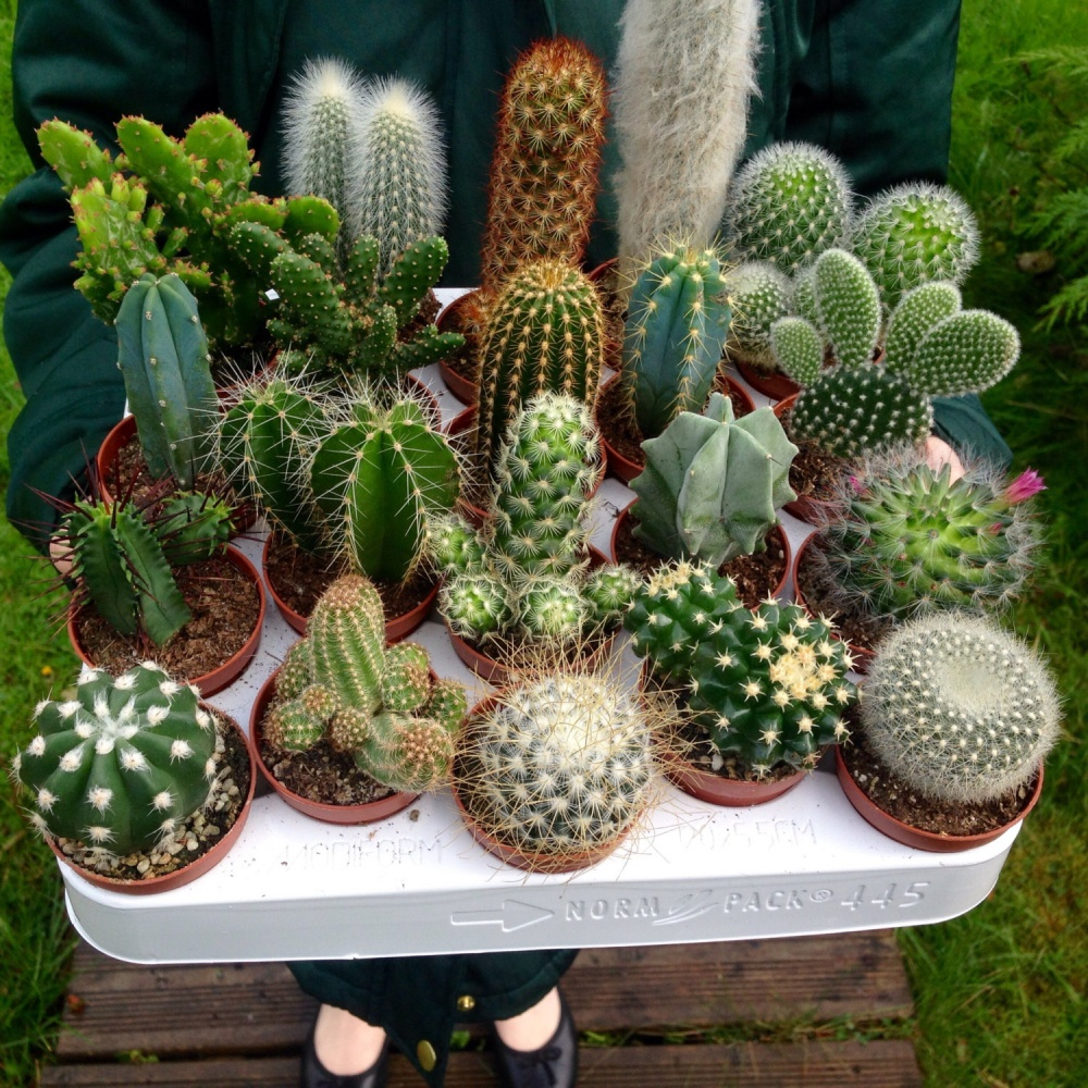 Set Of 10 Mixed Cactus Plants