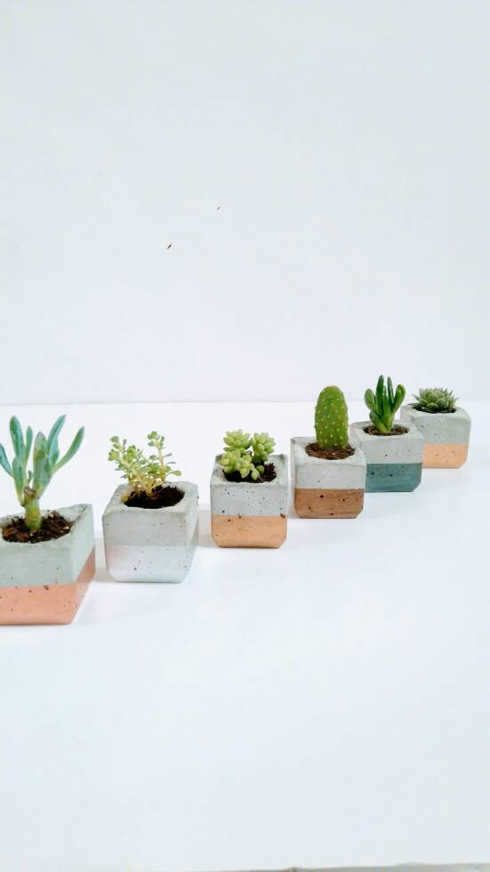 Trio Of Metallic Enamel Dipped Mini Concrete Succulent Planters
