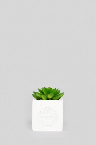 New Look White Mini Cube Artificial Succulent Plant